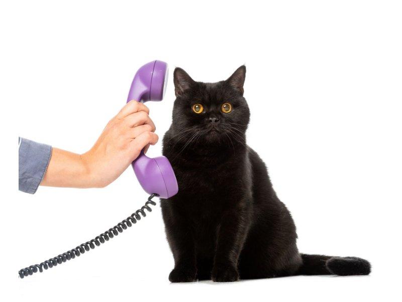teléfonos de vinaròs